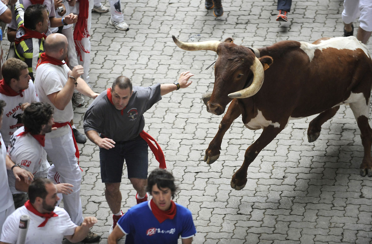 Participants run in front of a cow during the first San Fermin Festival bull run, on July 07, 2010, in Pamplona, northern Spain. The festival is a symbol of Spanish culture that attracts thousands of tourists to watch the bull runs despite heavy condemnation from animal rights groups.(Ander Gillena/Getty Images)