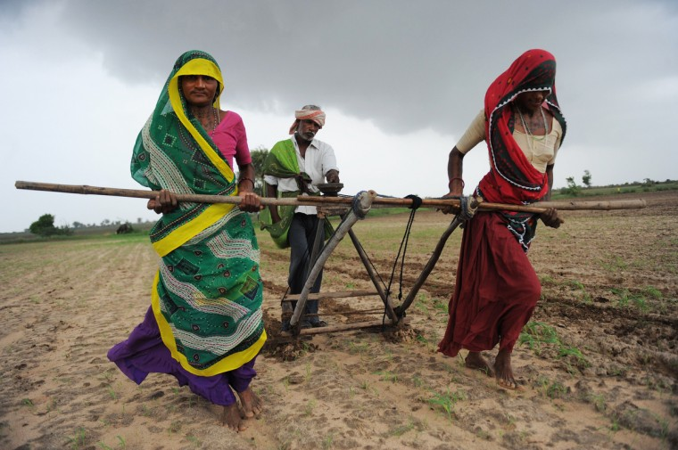 Indian farmers Hansaben(L), Geetaben (R) and Jesingbhai (C) plough a field in preparation for sowing cotton seeds in Nani Kisol village, around 70 km from Ahmedabad. Agriculture contributes about 15 percent to India's GDP but only 40 percent of farms are irrigated. The livelihood of hundreds of millions in the country of 1.2 billion people is dependent on the farming sector. (Sam Panthaky/GettyImages)