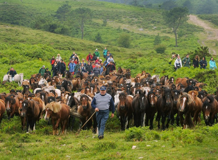 """Wild horses are rounded up in the hills on the eve of the Rapa das Bestas, or the """"shearing of the beasts,"""" festival on July 6, 2012 in Sabucedo, Spain. During the more than 400-year-old festival, that lasts three-days, wild horses are rounded up and wrestled to the ground by hand to have their manes and tails sheared. (Denis Doyle/Getty Images)"""