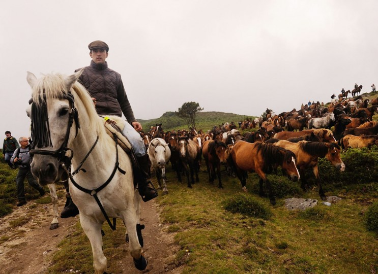 """Wild horses are rounded up in the hills on the eve of the Rapa das Bestas, or the """"shearing of the beasts,"""" festival on July 6, 2012 in Sabucedo, Spain (Denis Doyle/Getty Images)"""