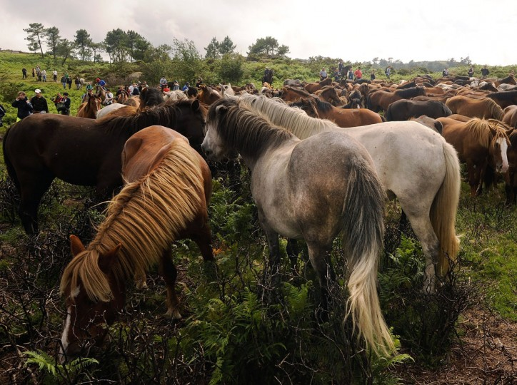 """Wild horses are rounded up in the hills on the eve of the rapa das bestas, or the """"shearing of the beasts,"""" festival on July 6, 2012 in Sabucedo, Spain. (Denis Doyle/Getty Images)"""