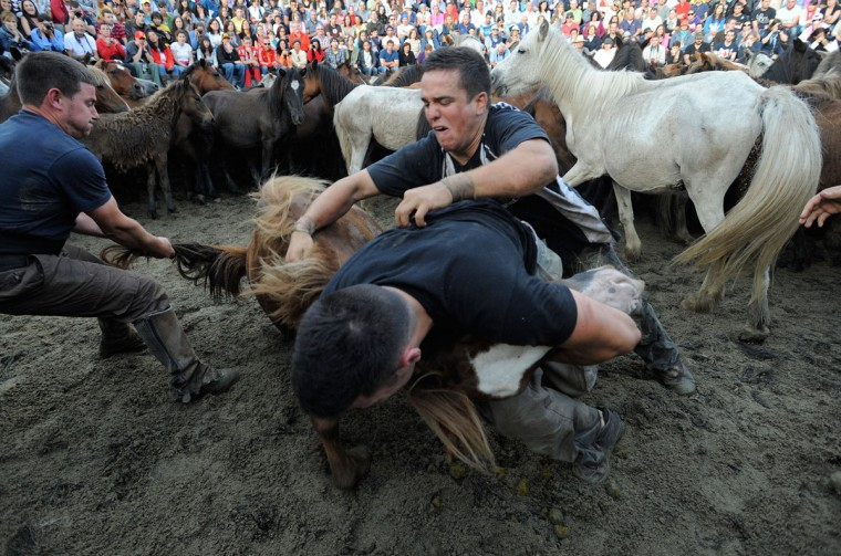 Aloitadores (fighters) try to tame a wild horse during the Rapa das Bestas on July 7, 2012 in Sabucedo, Spain. (Denis Doyle/Getty Images)