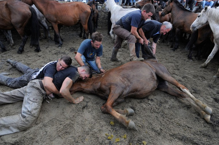 Aloitadores (fighters) tame a wild horse during the Rapa das Bestas on July 7, 2012 in Sabucedo, Spain. (Denis Doyle/Getty Images)