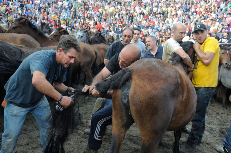 Aloitadores (fighters) tame wild horses during the Rapa das Bestas on July 7, 2012 in Sabucedo, Spain. (Denis Doyle/Getty Images)