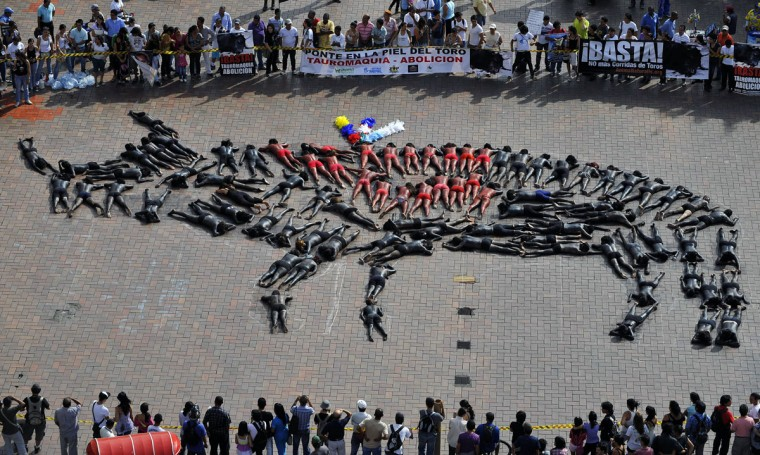 Activists create a giant bull shape with their bodies covered with paint during a protest against bullfighting in Cali, department of Valle del Cauca, Colombia, on June 30, 2011. (Luis Robayo/AFP/Getty Images)