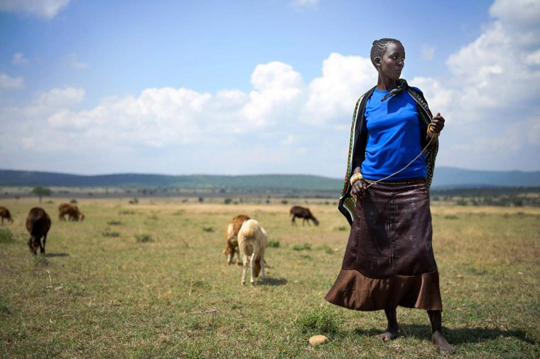 This photo made July 7, 2012 shows Nasirku Rakwa, 20, tending to a herd of goats in the plains surrounding the village of Nkoilale in Narok district in Kenya. Women's roles in the Masai society are changing in this area on the edge of the Maasai Mara game reserve. (Phil Moore/AFP/Getty Images)