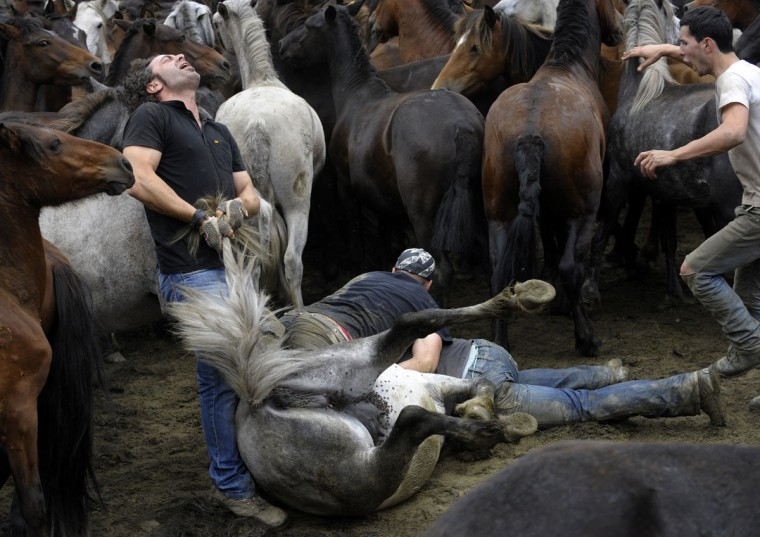 Aloitadores (fighters) struggle with a wild horse during the 400-year-old horse festival called Rapa das Bestas in Sabucedo, some 40 kms from Santiago de Compostela, on July 9, 2012. (Miguel Riopa/AFP/Getty Images)