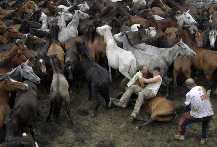 Aloitadores (fighters) struggle with wild horses during the 400-year-old horse festival called Rapa das Bestas in Sabucedo, some 40 kms from Santiago de Compostela, on July 9, 2012. (Miguel Riopa/AFP/Getty Images)