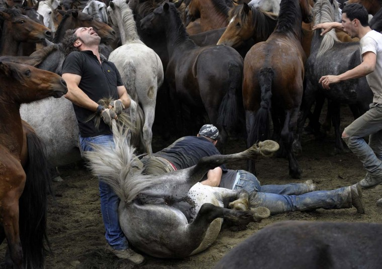 """Aloitadores"" (fighters) struggle with a wild horse during the 400-year-old horse festival called ""Rapa das bestas"" (Shearing of the Beasts) in Sabucedo on July 9, 2012. (Miguel Rio/AFP/Getty Images)"