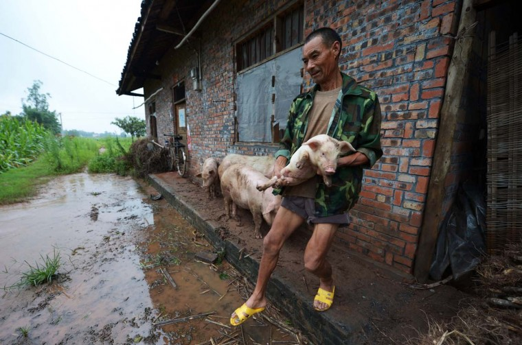 This picture taken on July 22, 2012 shows a farmer trying to save his pigs from his flooded farm in the outskirts of Chongqing. More torrential rain was forecast in China's northeast and southwest, after at least 10 other people were killed since July 20, while landslides in southwestern Sichuan province resulted in six deaths, provincial flood control and drought relief officials reported. (Stringer/AFP/Getty Images)