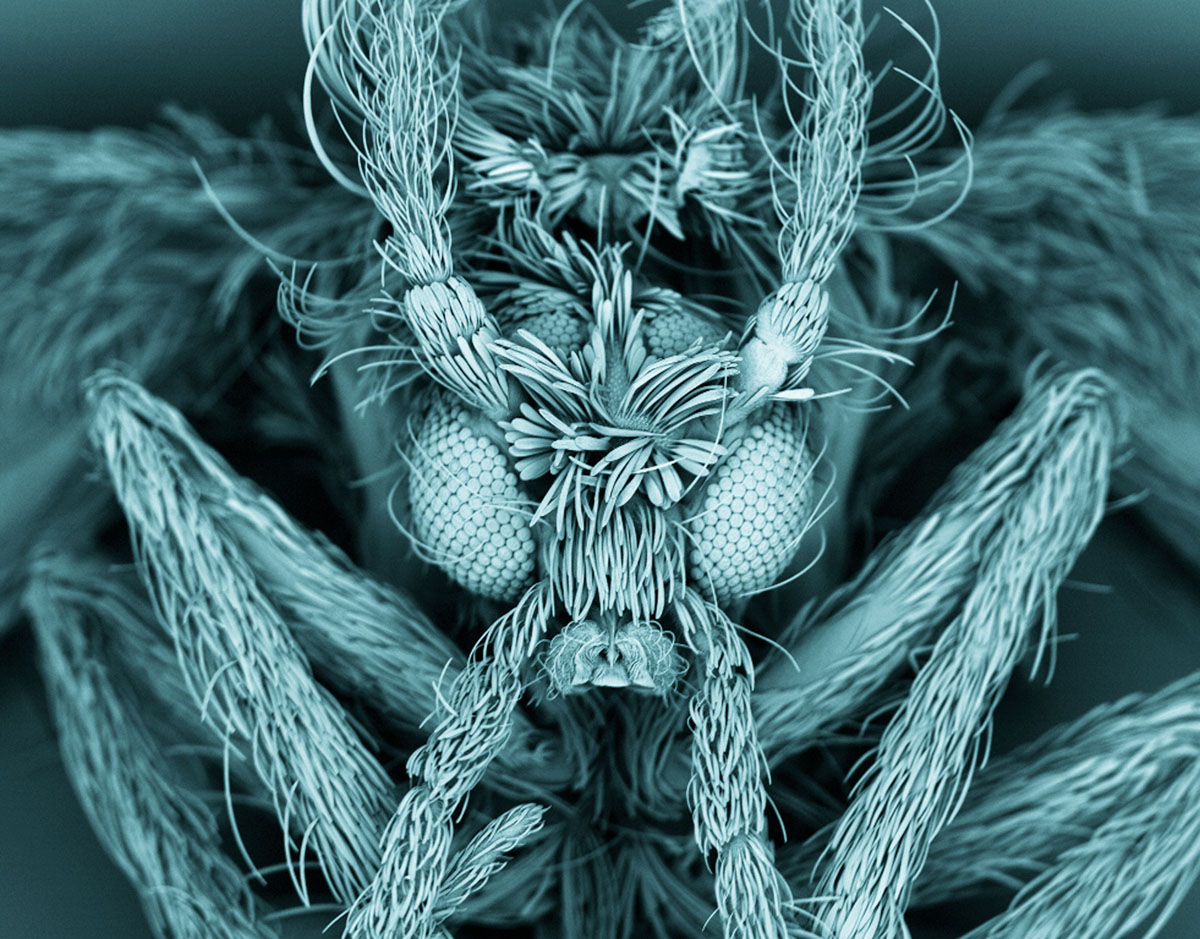 Up Close: 2012 Wellcome Image Awards