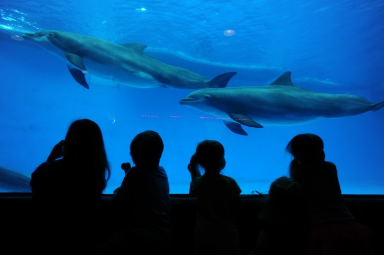 Children watch the dolphins at the National Aquarium in Baltimore. (Algerina Perna/Baltimore Sun)