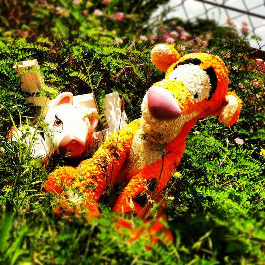 A small memorial is marked on the side of the road on W. Baltimore Street with a ragged stuffed doll of Tigger, from Winnie the Pooh, May 27, 2012.