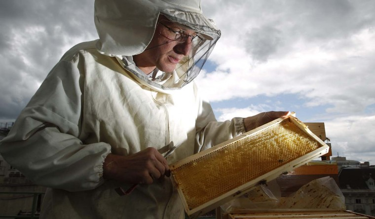 Felix Munk, head of the beekeeper organization Stadtimker, checks a honeycomb at the rooftop of the Austrian chancellery in Vienna July 16, 2012. Munk is a member of Vienna's Stadtimker, one of a growing number of urban beekeepers' associations who are trying to encourage bees to make their homes in cities, as pesticides and crop monocultures make the countryside increasingly hostile. (Lisi Niesner/Reuters)