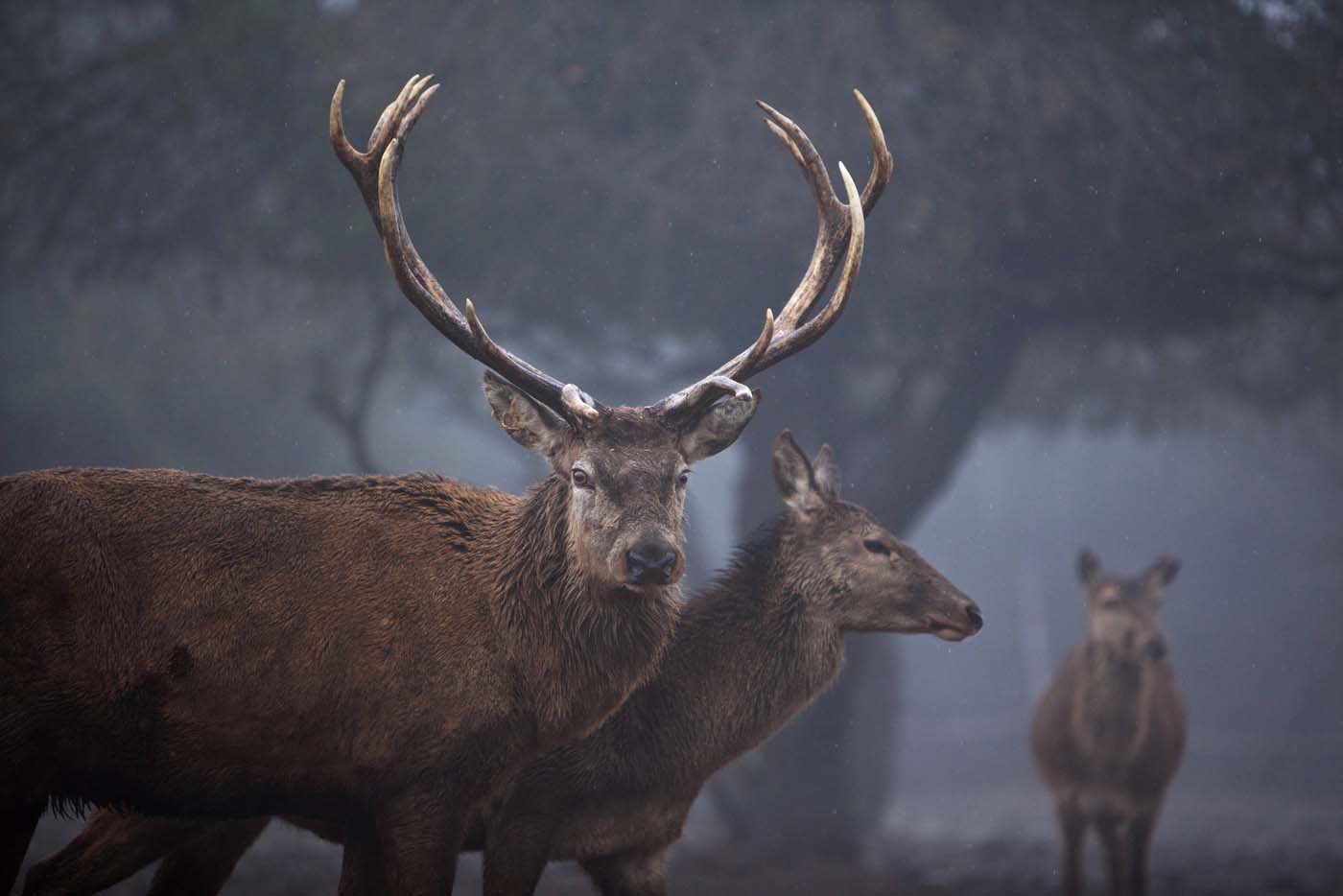 Red deer roam on a foggy day in the Golan Heights, near Israel's border with Syria January 17, 2012. (Nir Elias/Reuters)