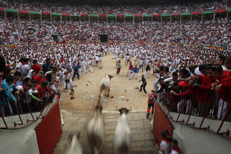 Steers enter the bullring during the second running of the bulls of the San Fermin festival in Pamplona. There were no injured runners in the run that lasted two minutes and twenty nine seconds, according to local media. (Susana Vera/Reuters photo)