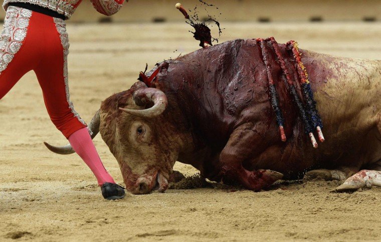 A bullfighter's assistant kills a bull during the first bullfight of the San Fermin festival in Pamplona July 7, 2012. (Joseba Etxaburu/Reuters)