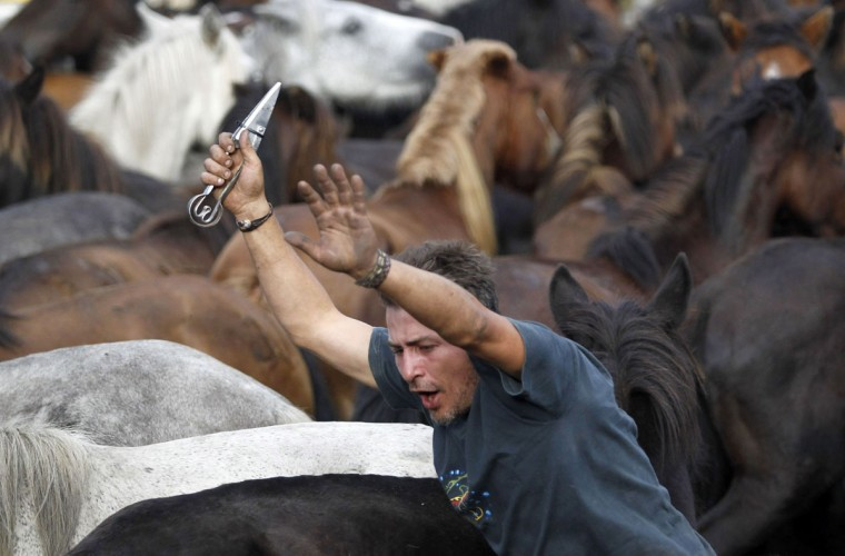 A reveler tries to hold on to a wild horse during the Rapa Das Bestas traditional event in the Spanish northwestern village of Sabucedo July 7, 2012. (Miguel Vidal/Reuters)