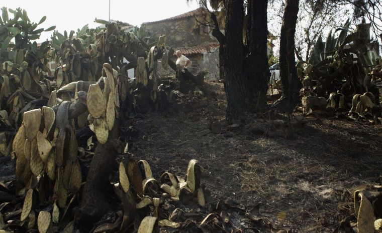 A man inspects a burnt area around his home in the Vilaflor municipality on the southern part of Spanish Canary Islands of Tenerife July 18, 2012. (Santiago Ferrero/Reuters)