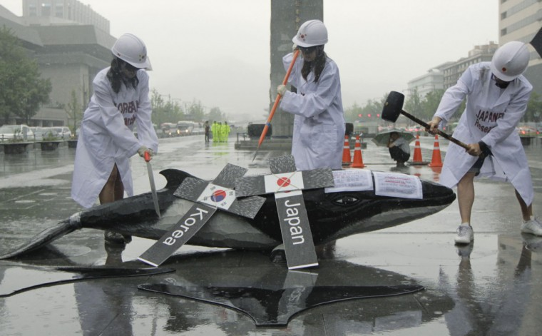 Environmental activists demonstrate with a mock whale, during a protest against the plans of the South Korean government to resume hunting whales for research purpose, in central Seoul. South Korea on Wednesday proposed resuming whaling for scientific research, angering other Asian countries and conservationists who said the practice would skirt a global ban on whale hunting. (Woohae Cho/Reuters)