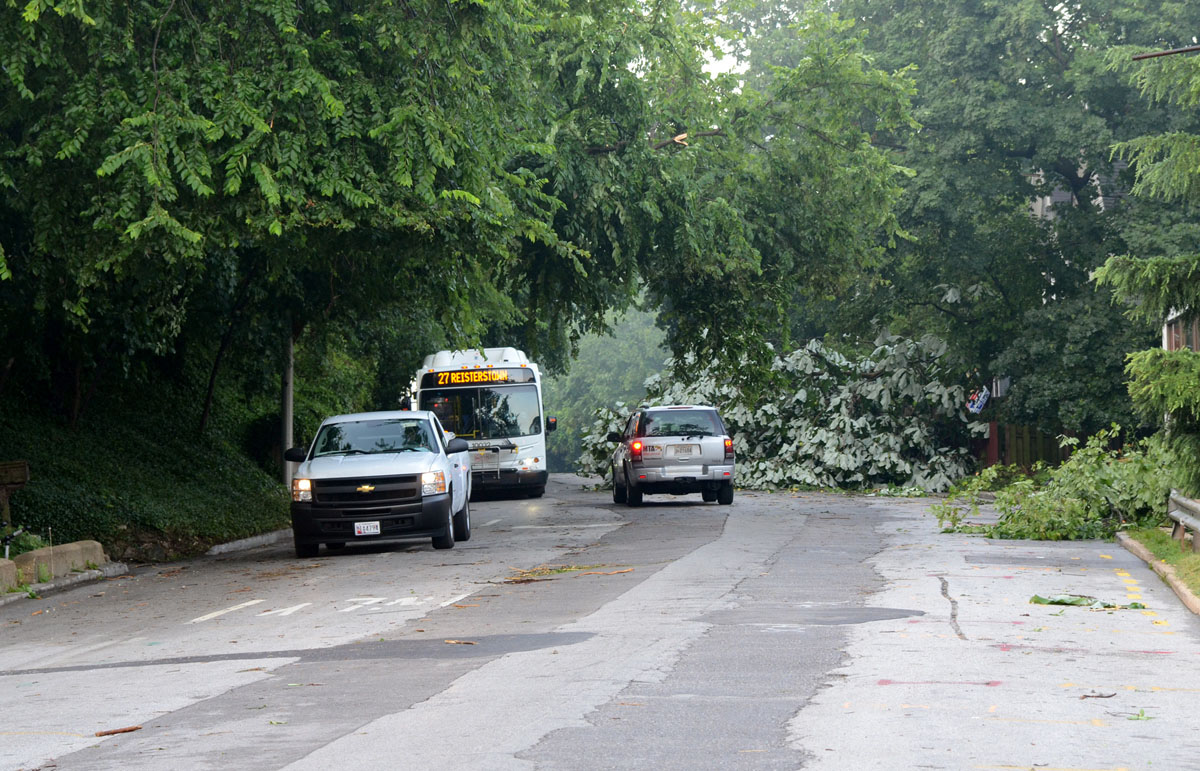 Cars, trucks and buses try to share this section of Falls Road, between Kelly Avenue and Northern Parkway, as a tree has taken over half of it. (Jon Sham/Patuxent Homestead)