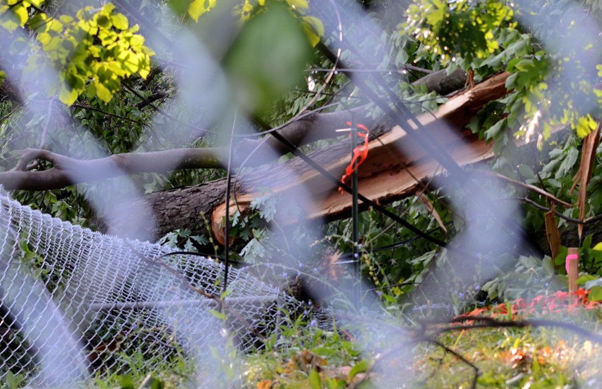A large tree went down onto Merville Avenue in Mt. Washington, and took with it a section of this fence and a nearby power line. (Jon Sham/Patuxent Homestead)