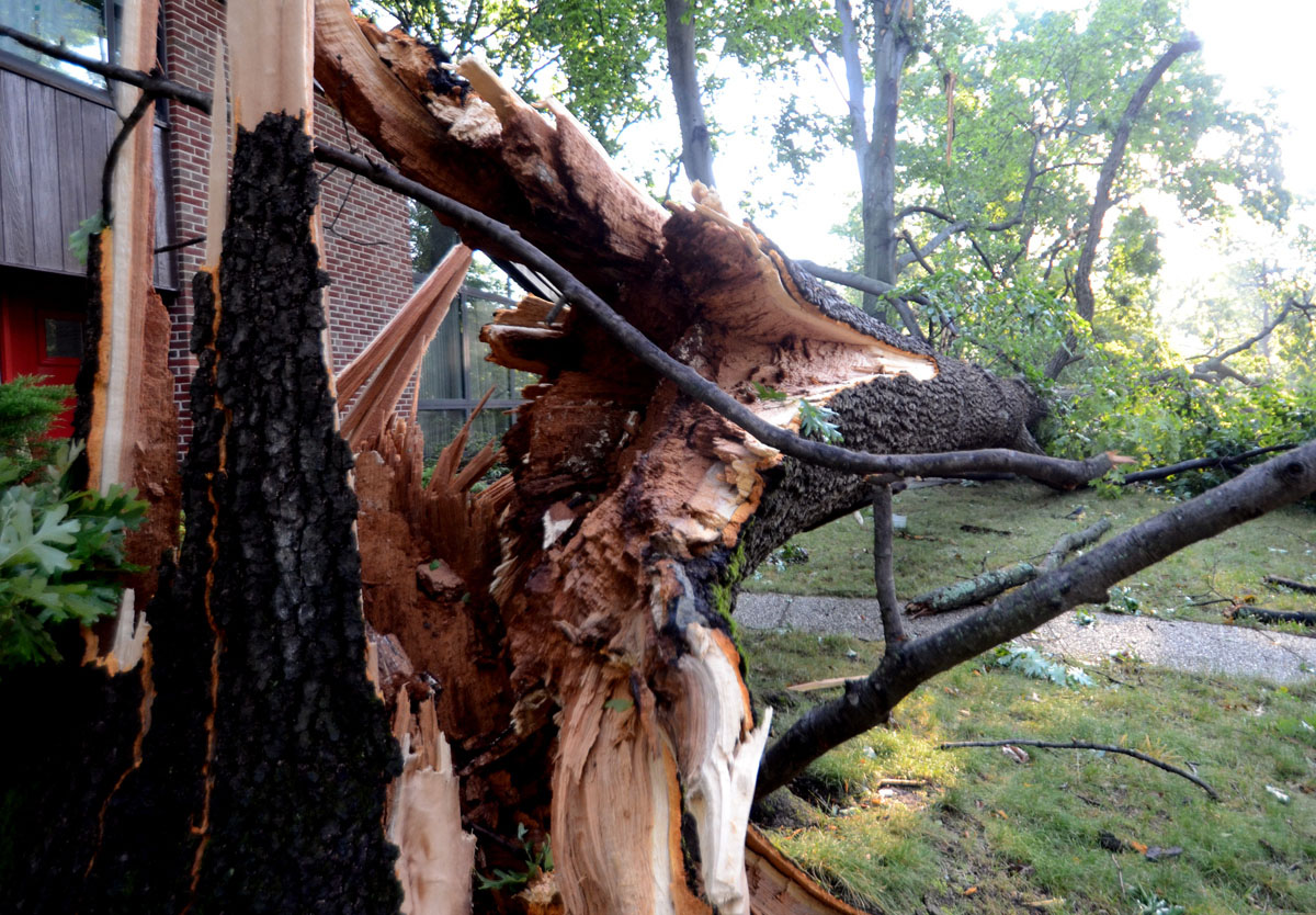 On Rockwood Avenue, off Pimlico Road, I found this tree lying across the entire front lawn of a house and into the neighboring property. (Jon Sham/Patuxent Homestead)