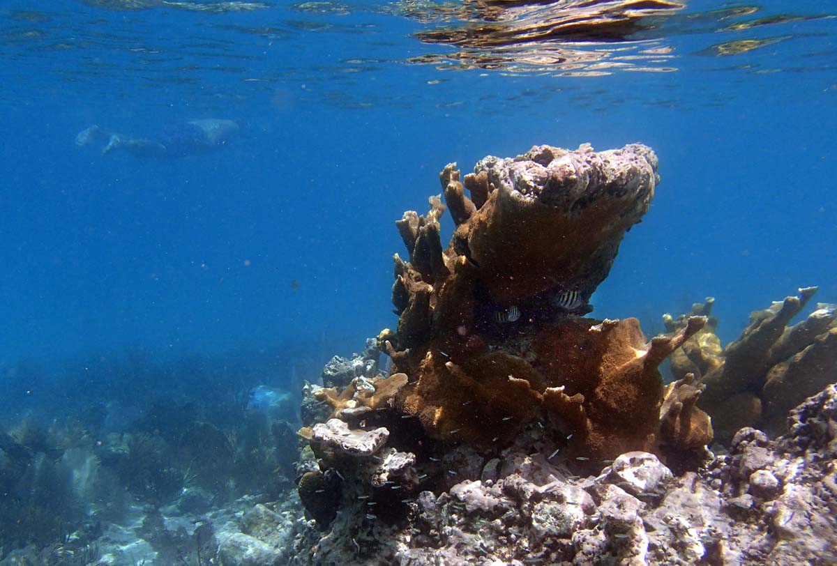 This is the same coral rock that I shot earlier at a slightly lower angle which allowed the rock to reflect off the surface of the water in Trunk Bay. (Robert K. Hamilton/Baltimore Sun)