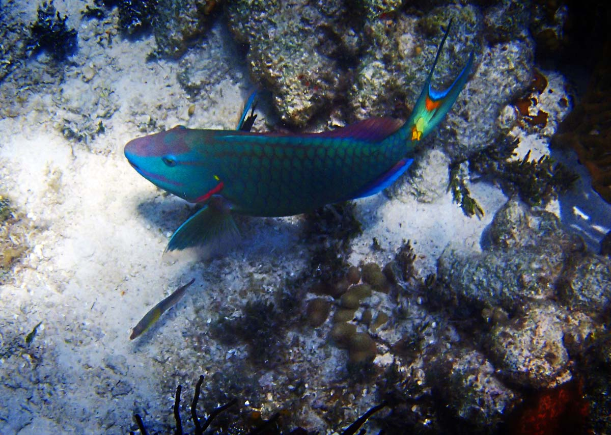 I thought this image really brought out the bright colors in the fishes tail. I photographed it in Diamond Reef, British Virgin Islands. (Robert K. Hamilton/Baltimore Sun)