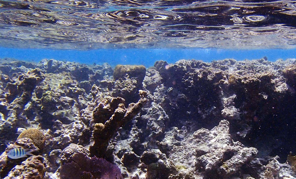 I used the underwater landscape scene mode on the Olympus camera to shoot this picture of Diamond Reef in the British Virgin Islands. (Robert K. Hamilton/Baltimore Sun)