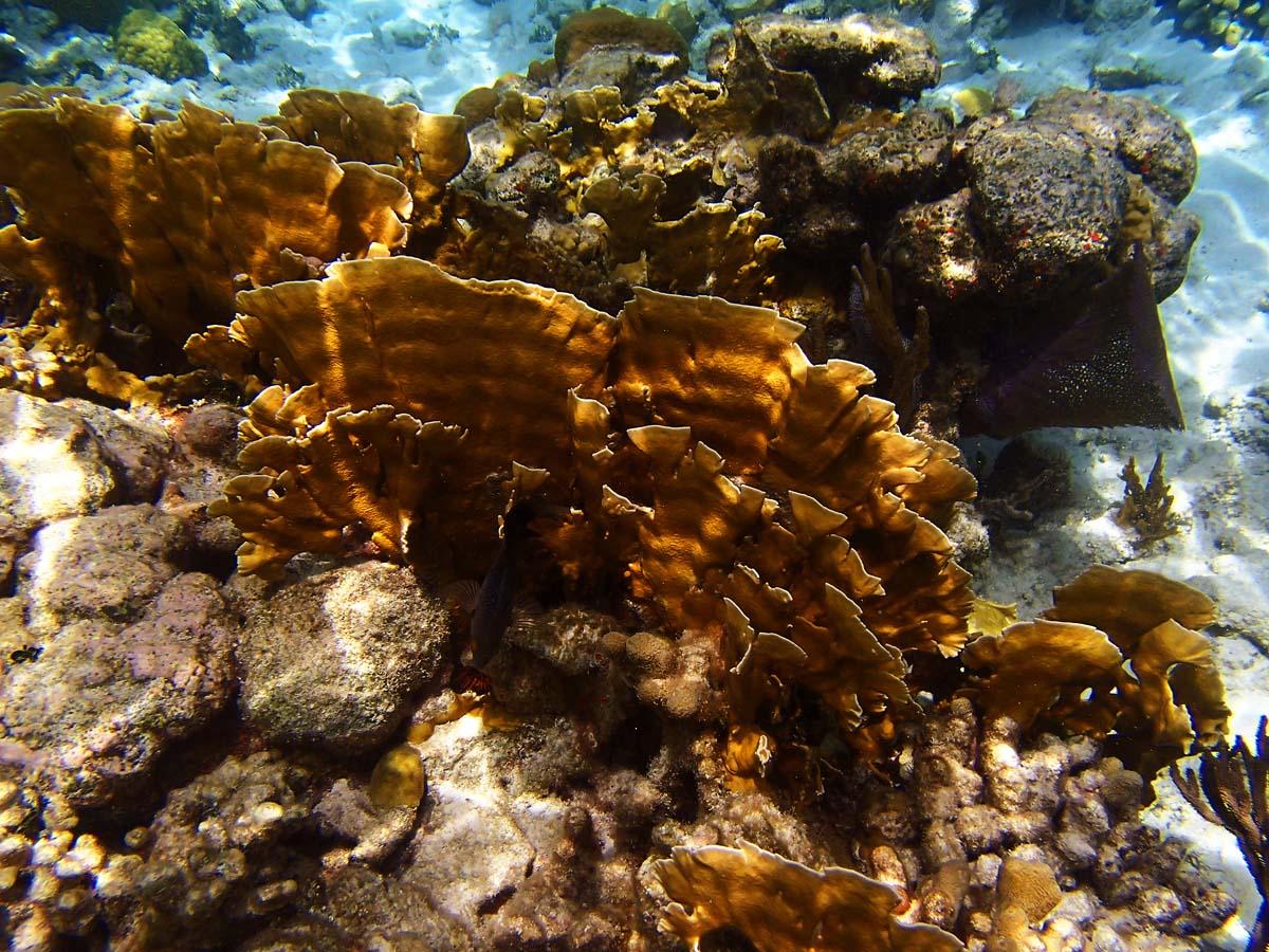 Colorful coral reef at Diamond Reef in the British Virgin Islands. (Robert K. Hamilton/Baltimore Sun)