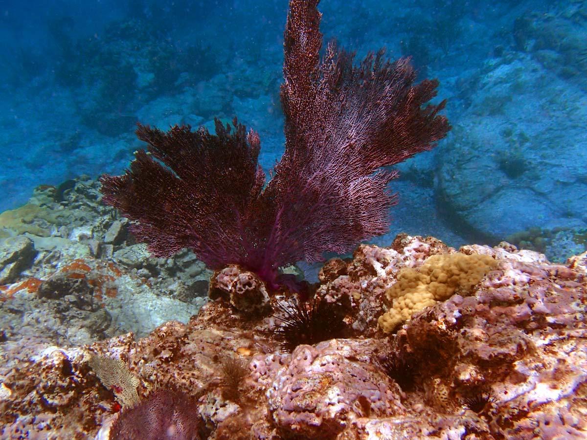 Colorful reef at Cinnamon Bay, St. John. (Robert K. Hamilton/Baltimore Sun)