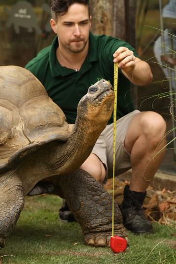 Zookeeper Grant Kother, at ZSL London Zoo, weighs and measures a giant tortoise during the zoo's annual weigh-in. The height and mass of every animal in the zoo, of which there are over 16,000, needs to be recorded. The measurements are collated in the Zoological Information Management System, from which zoologists can use the data to compare information on thousands of endangered species. (Oli Scarff/Getty Images)