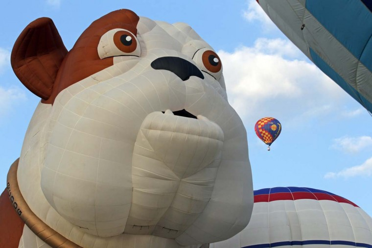 Hot air balloons of all shapes and sizes such as this one in the form of a bulldog take to the skies from Ashton Court at (Matt Cardy/Getty Images)