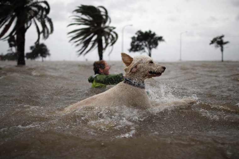 Ruffin Henry and Scout the dog swim in the rising water of Lake Pontchatrain as Hurricane Isaac approaches. (Chris Graythen/Getty Images)