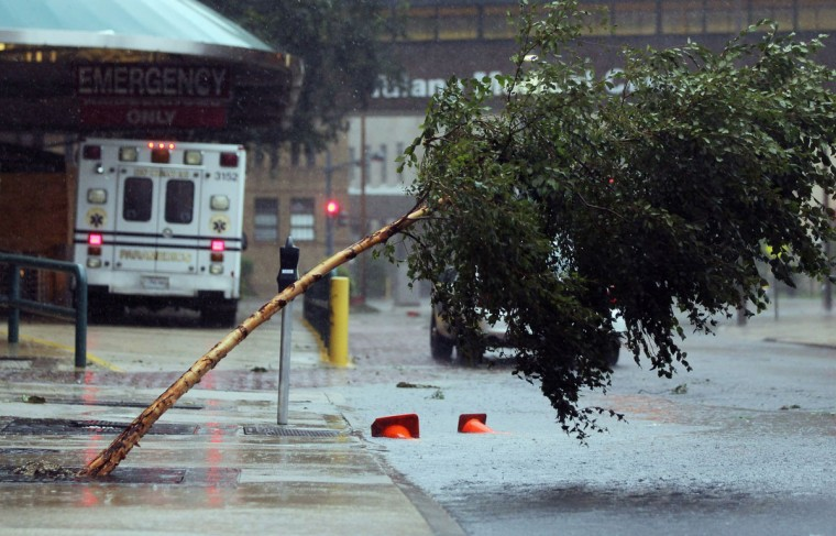 A tree is blown over outside Tulane Medical Center during the rains from Hurricane Isaac on August 29, 2012 in New Orleans, Louisiana. (Mario Tama/Getty Images)