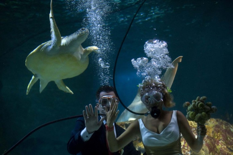Fran Calvo (L) and Monica Fraile (R) celebrate their wedding in a Sea Life Aquarium on August 6, 2012 in Benalmadena, where two couples took the opportunity to get into the pool to get married. (Jorge Guerrero/AFP/Getty Images)