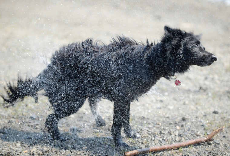 A dog shakes water out of its fur at Edersee reservoir near Rehbach, Germany. (Uwe Zucchi/AFP/Getty Images)