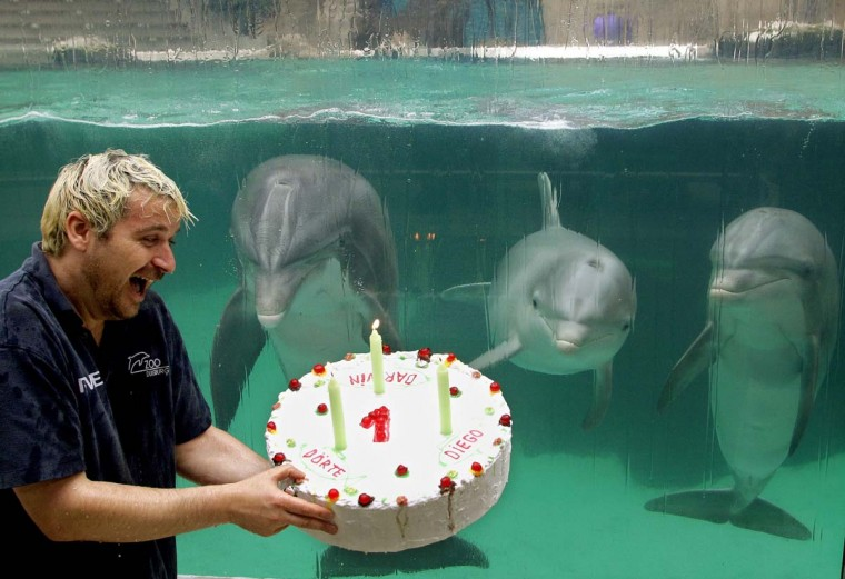 Dolphin trainer Thomas Lange holds a birthday cake for the young dolphins Diego, Doerte and Darwin on August 31, 2012 at the zoo in Duisburg, western Germany. Within two weeks in summer 2011, the three dolphins were born at the zoo's dolphinarium and got the cake now for their first birthday. (Roland Weichrauch/Getty Images)