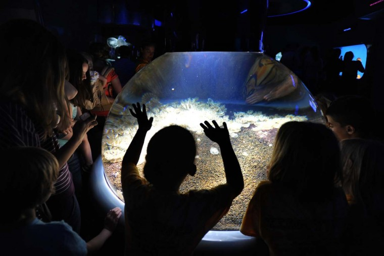 Children observe a tank of Upside-Down jellies. Jellies eat Zooplankton, a collection of floating, drifting organisms primarily composed of microscopic algae and protozoa. Taken with a Nikon D700; ISO 2000; F 2.8; shutter 1/125; 17mm. (Algerina Perna/Baltimore Sun)