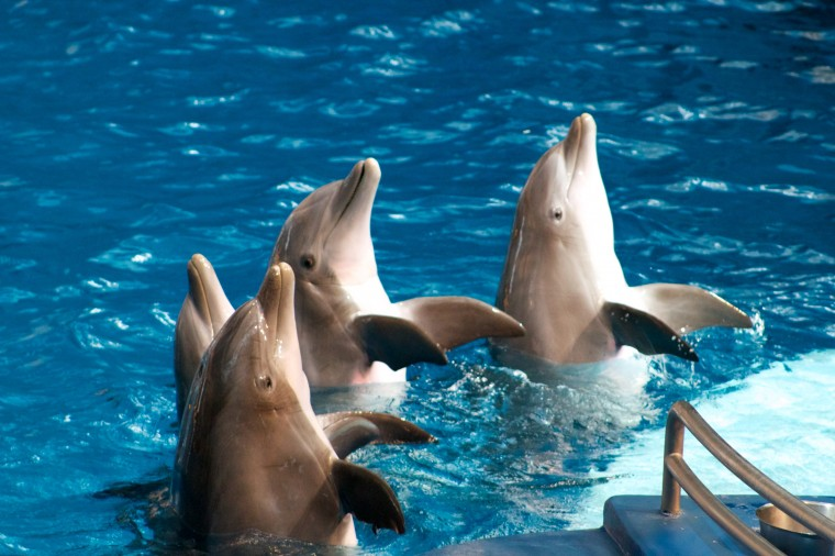 One of the first times I used my DSLR was at the dolphin show at the National Aquarium. (Joe Sterne)