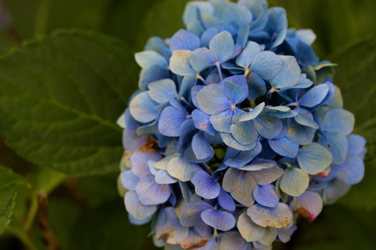 A flower in a garden. (Joe Sterne)