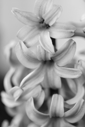 A flower found in Federal Hill. (Joe Sterne)