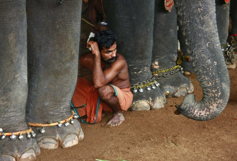 A mahout sits in between elephants which are participating in festivities marking the annual harvest festival of Onam at a temple on the outskirts of the southern Indian city of Kochl. (Sivaram V/Reuters)
