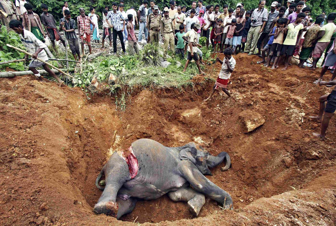 August 2 Photo Brief: Elephant burial, Kofi Annan steps down as UN-Arab League envoy and Day 6 at the Olympics