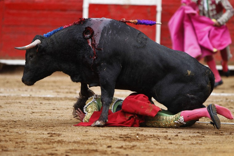 Spanish matador Tulio Salguero is trampled by a bull during a bullfight in The Mexico bullring in Mexico City August 26, 2012. (Edgard Garrido/Reuters)