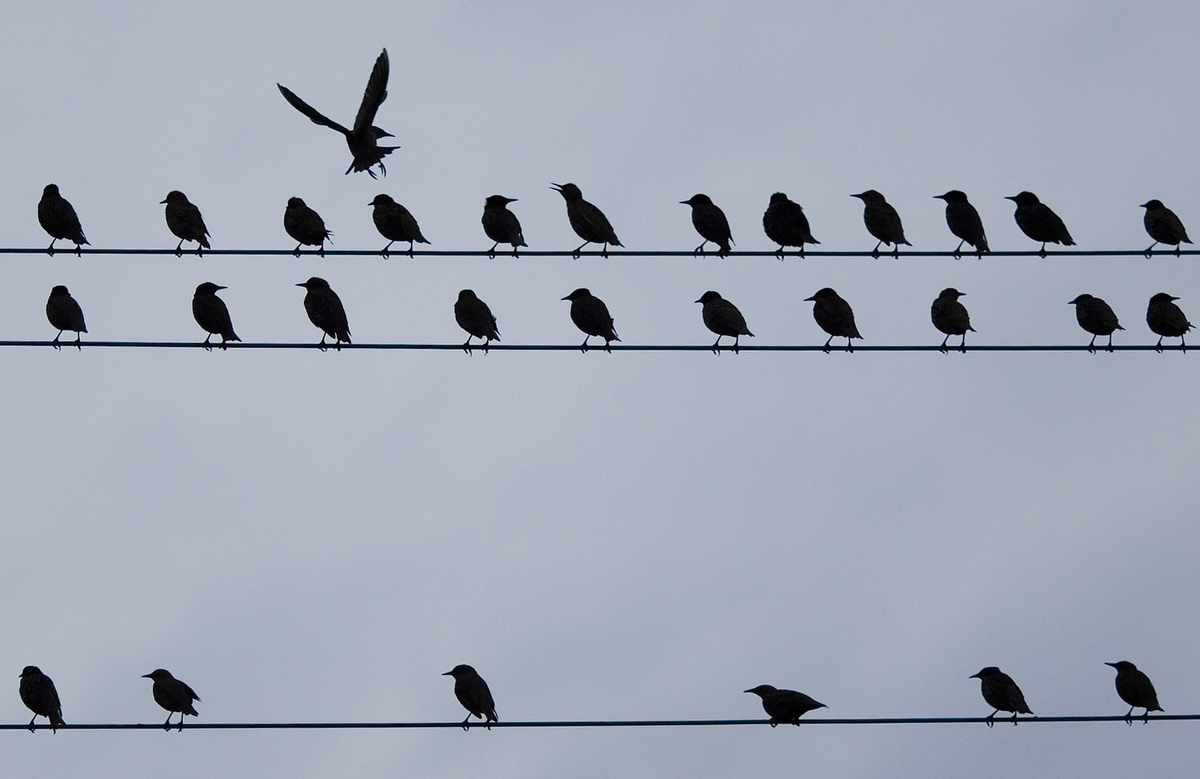 Why Can Birds Sit On Telephone Wires Wire Center Proton Aa1660 Solid State Amplifier A Rh Darkroom Baltimoresun Com And