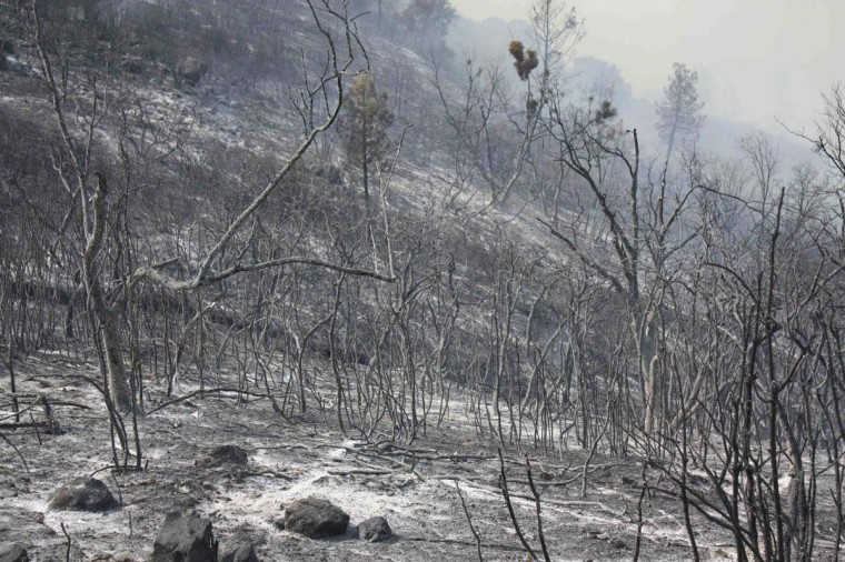 A hillside lies scorched by the Ponderosa Fire near Red Bluff, California. California Governor Jerry Brown declared a state of emergency in three Northern California counties after the fire, which has already destroyed 50 buildings advanced with 75-foot flames on a tiny community at the doorstep of a national park. (REUTERS/Mary Slosson)