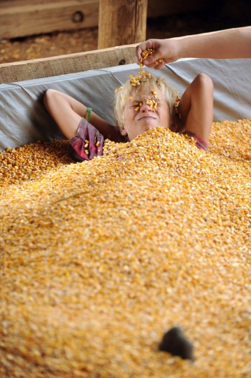 Day 1: Jared Thomas, 12, of Woodbine is buried by friends in a play area filled with corn. (Brian Krista/Patuxent Homestead)