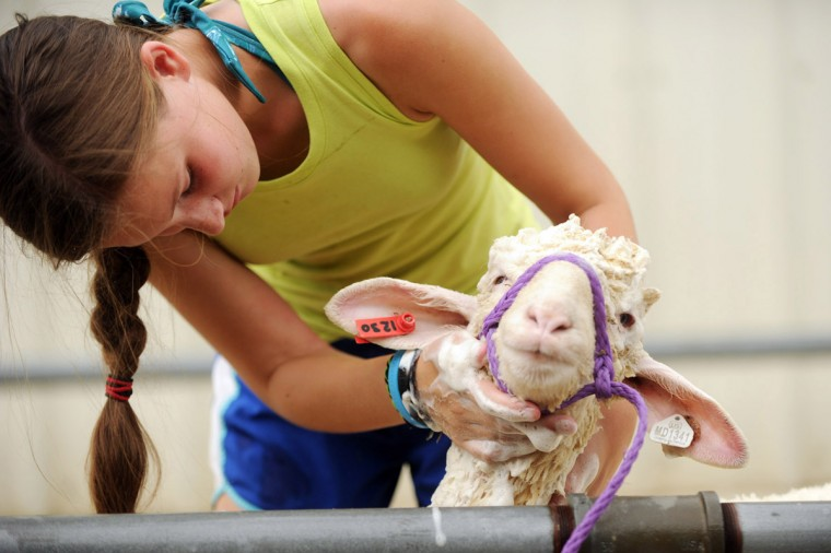 Day 1: Emily Michalski, 13, of Maplewood Farm in Woodbine gives her sheep a shampoo. (Brian Krista/Patuxent Homestead)
